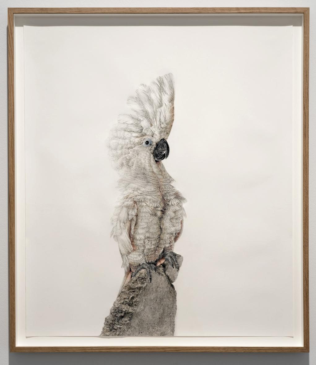 Schroedinger´s Bird 1 - Chalk Pastels on Paper, 68 x 79cm, 2016 - Photograph: © Andreas Baudisch, Galerie Gerken