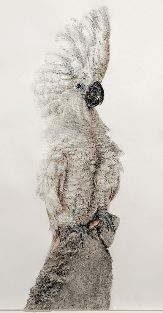 Schroedinger´s Bird (1); Chalk Pastels on Paper, 68 x 79cm, 2016, Photograph: © Andreas Baudisch, Galerie Gerken