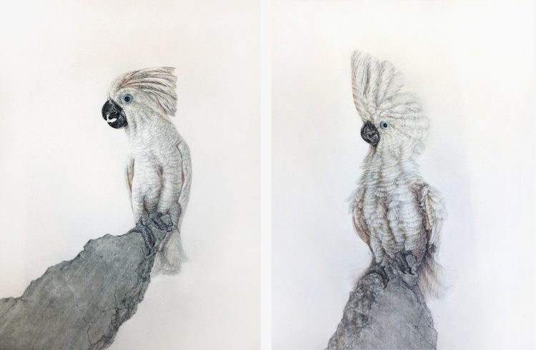 Schrödinger´s Bird /6 + /7